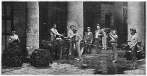 Preparing the Tobacco Leaves for Market, Havana, Cuba 1908