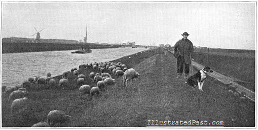 Holland - Sheep Grazing on a Canal