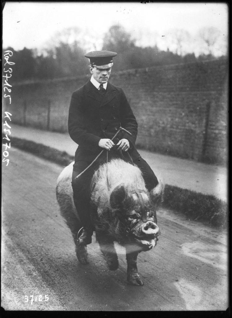 Man Riding a Pig